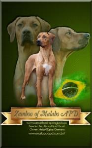 Zamboo of Malabo APD Heide Rüpke