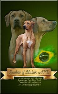 Zamboo Collage